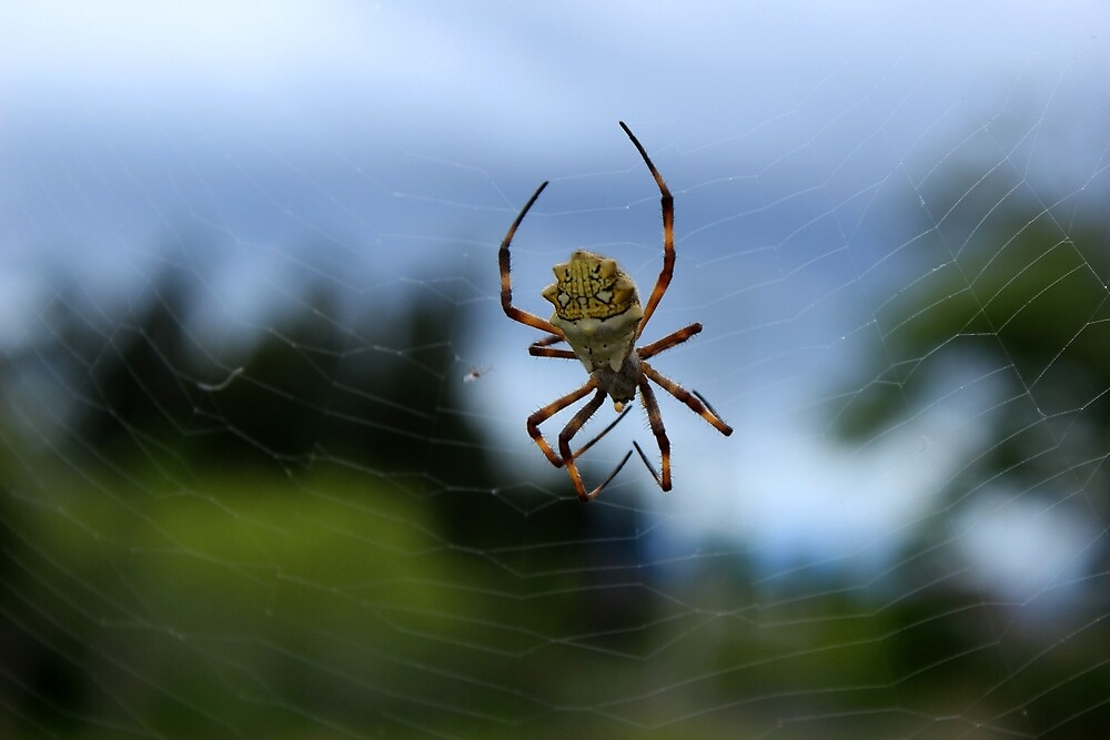 Yellow and White Spider by rhamm
