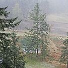 Snowing in the Valley  by TerrillWelch