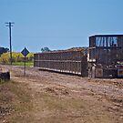 Truck collecting bins for cane train by Kim Austin