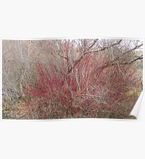 Willows and Dogwood Poster