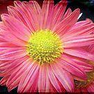 A flower © by Dawn Becker