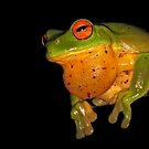 Jabba the Hutt... (Litoria Chloris) by Neil Ross