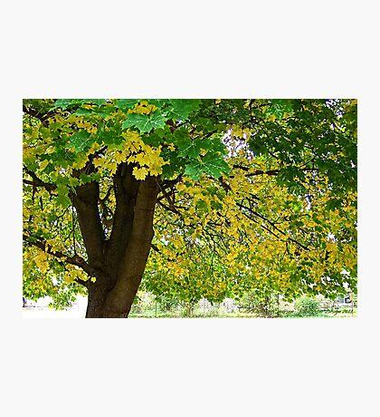 Yellow Autumn Photographic Print