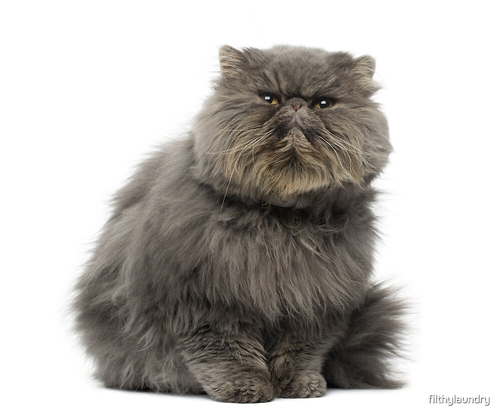 """ROSIE RENEGADE the """"Angry"""" Puss by filthylaundry"""