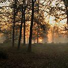 Forest Morning sun by ienemien