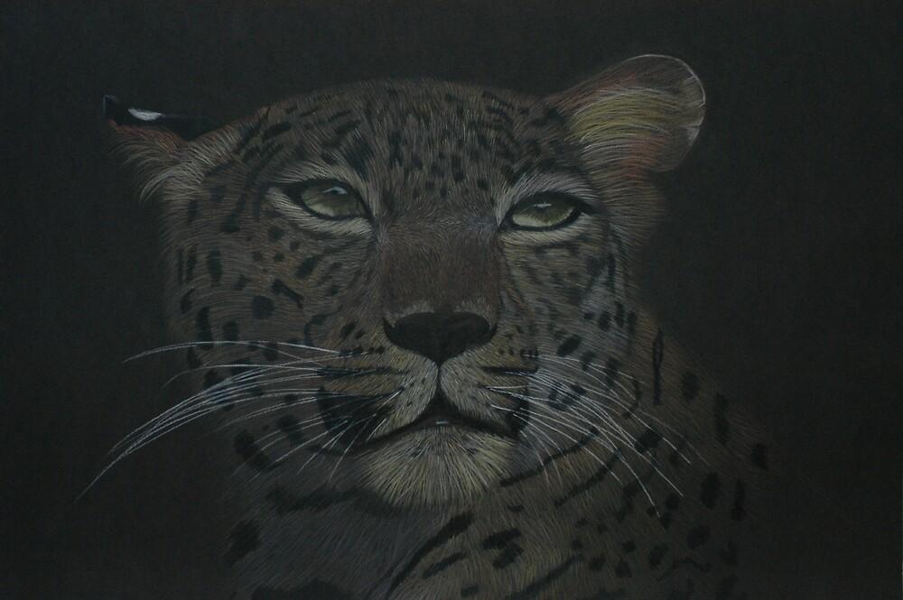 Big cat star gazer by AllysCritters