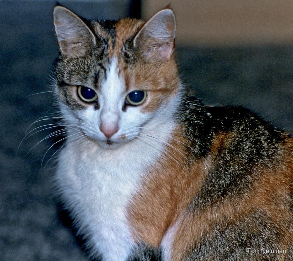 Kitten Lucky 13 by Tom Newman