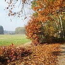 Autumn Walk by orko