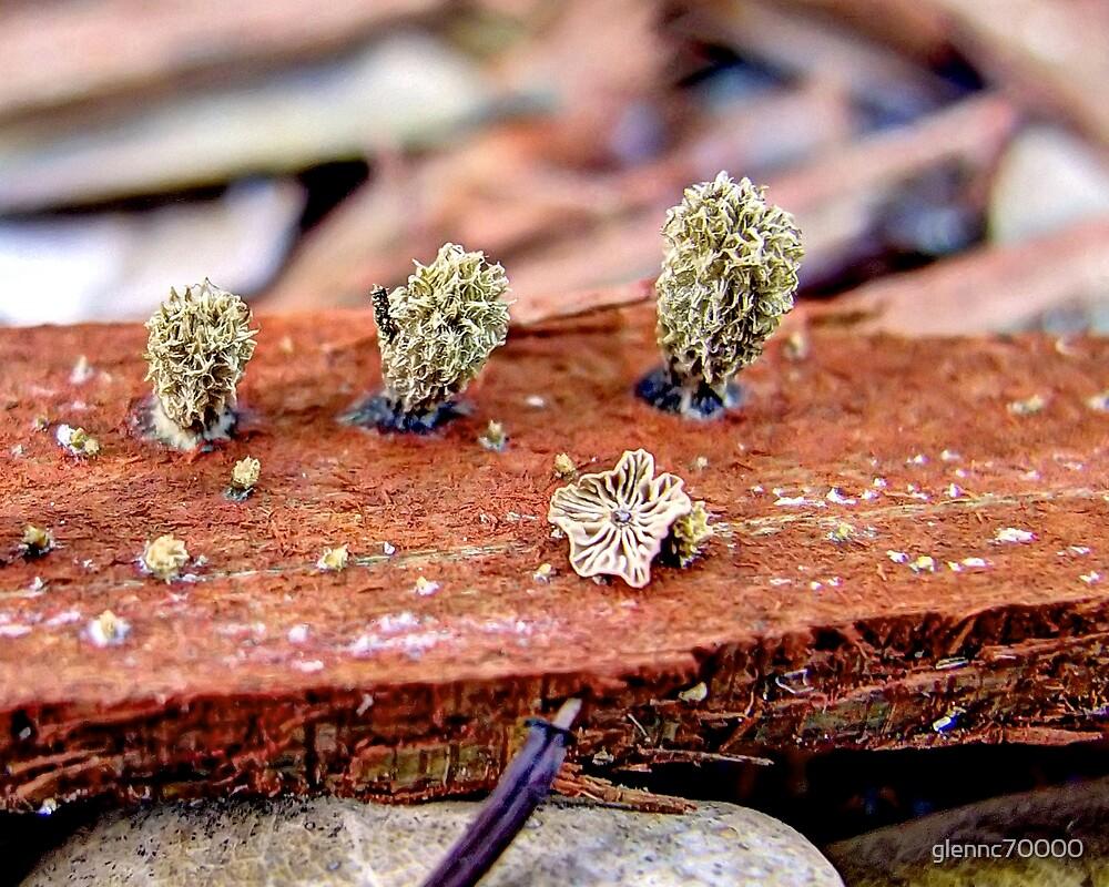 Unidentified Fungus Macro by glennc70000