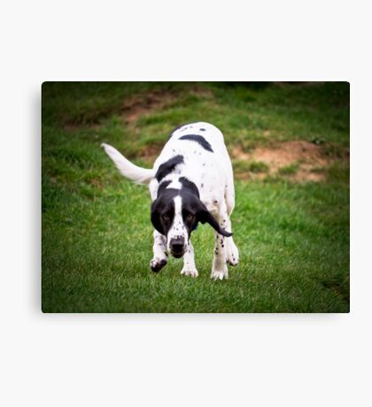 Well Spotted Canvas Print