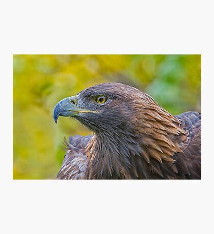 Golden Eagle Profile Photographic Print