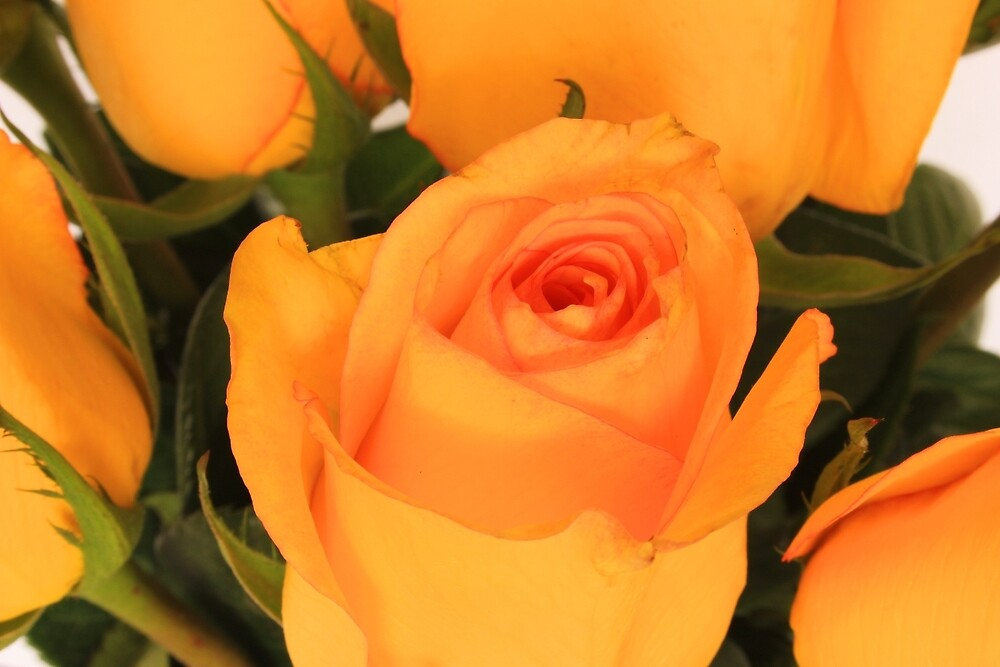 Yellow Rose Bouquet by rhamm