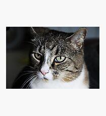 Meet Tiger! Photographic Print