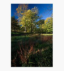 The Grass Turns Red Photographic Print