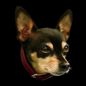 Chihuahua by TONYNSANE