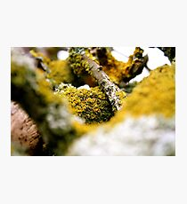 Growth from Nothing Photographic Print