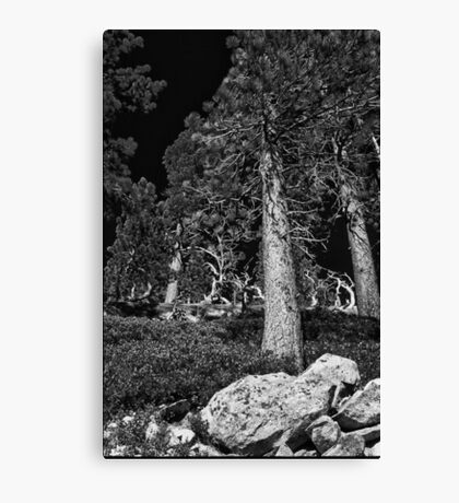 Tahoe Pines Near the top 1 Canvas Print