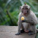 Balinese Macaque by DanielTMiller