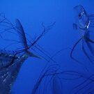 Aquarium II by kossimarsalsa