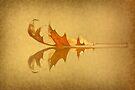 Beneath The Falling Leaves by Evelina Kremsdorf