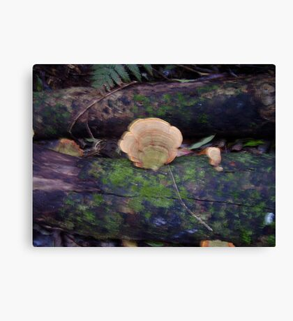 more Fungi Canvas Print