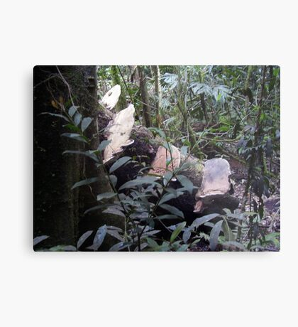 Fungi from the Forest; Metal Print