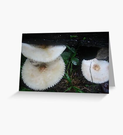 Fungi Rainforest Garden Greeting Card