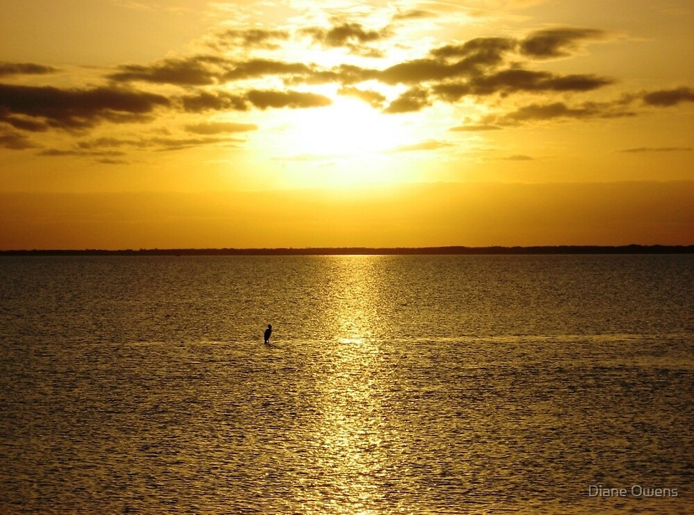 Shore bird taking in the setting sun on the Gulf of Mexico by Diane Owens