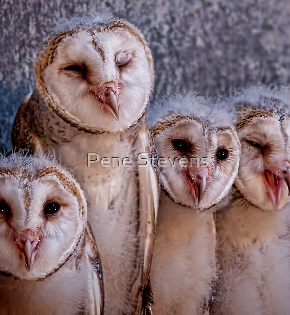 """.... and the other one said .... """"Two hits to who?""""  by Pene Stevens"""