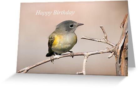 Cute Bird on a Branch by cardinal5