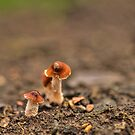 Small Tiny Toadstools,  by Elaine123