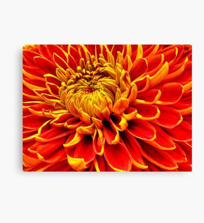 Color Mum Bloom - Macro Canvas Print