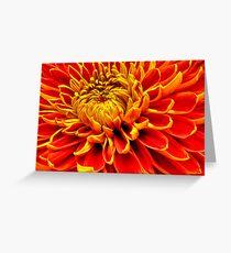 Color Mum Bloom - Macro Greeting Card
