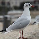 I'm a Seagull and I shall Pose by Pamela Jayne Smith