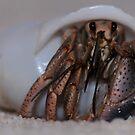 Hermit Crab by Lolabud