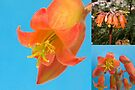 Cactus Flower - Triptych - Macro by DPalmer