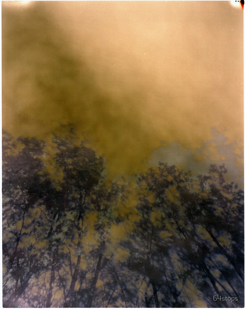 pinhole image of trees by 64stops