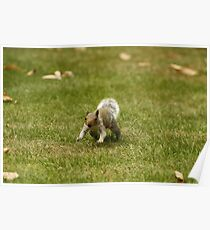 Charging Squirrel Poster