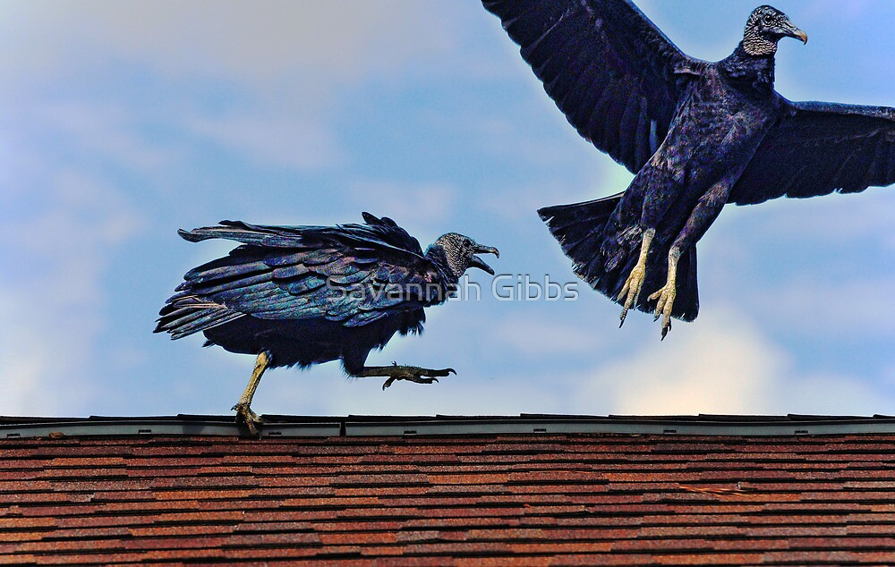 Vultures on the roof by Savannah Gibbs