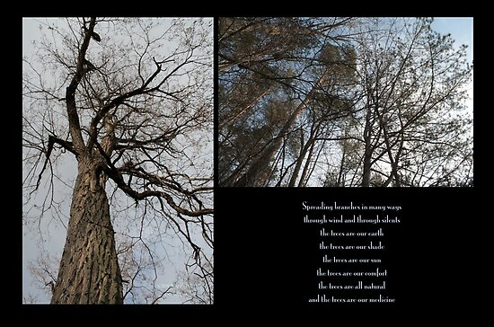 Branches by DreamCatcher/ Kyrah