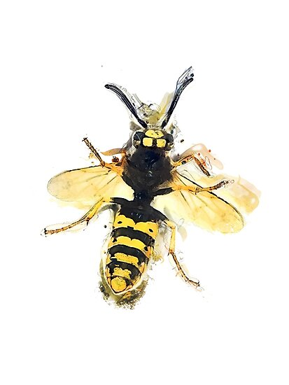 Wasp by JBJart