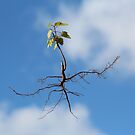 Rooted in the Clouds by Bob Hardy