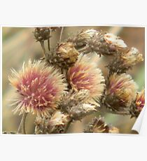 Fall Thistle Beauty Poster