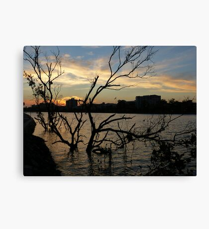 Mangroves growing in the river Canvas Print