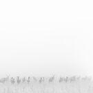 My Deer Friends 2 by Henrik Malmborg