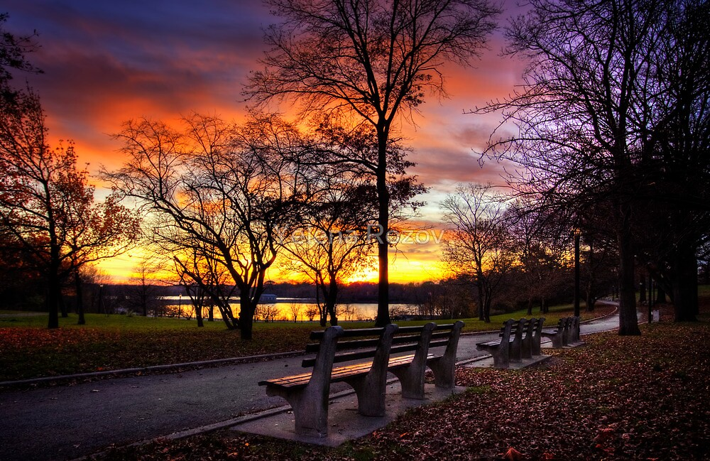 Bench with a view by Yelena Rozov