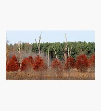 Red Tree, Dead Tree, Green Tree Photographic Print
