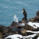 Cormorant and Gull by Tracy Riddell