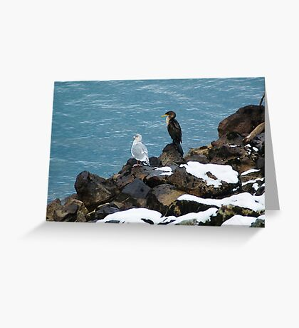Cormorant and Gull Greeting Card