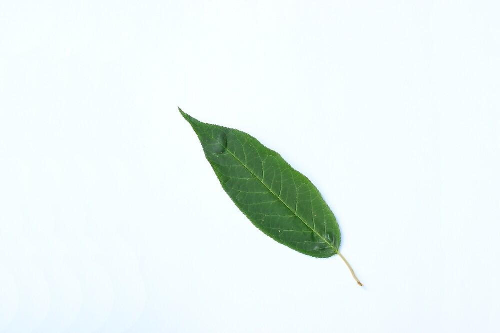 Tree Leaf by rhamm
